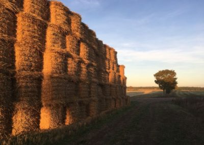 IMG_5994_Lower-Farm